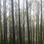 나무 프로필 이미지