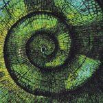 『마음의 생태학』 표지(부분). 사이버네틱스적 순환성을 표현한 이미지.