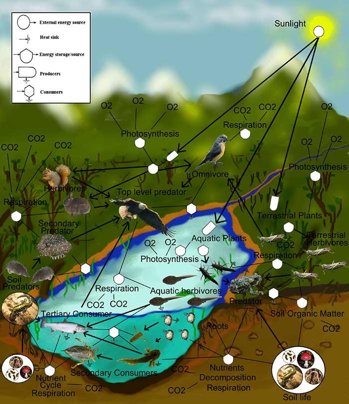 지구를 구성하고 있는 생태계 네트워크는 다양한 노드들의 연결을 통해 절묘한 조화를 이루고 있다.