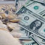 그 많던 조개껍데기 화폐는 왜 문제가 되지 않았을까? - MMT(Modern Monetary Theory)와 기본소득