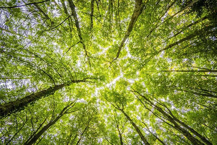 정동정치는 우리의 생명력과 활력에 대한 신뢰이자, 녹색정치가 갖고 있는 판과 구도에 대한 믿음이다. by Felix Mittermeier, 출처: www.pexels.com/ko-kr/photo/957024/