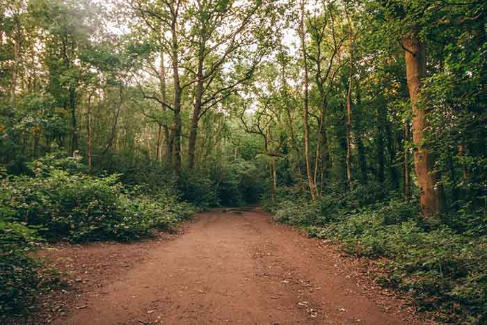 숲이 있는 목초지는 나무들이 있고 동물들을 방목하는 땅이다. 숲이 있는 공유지는 한 사람이 소유하고 있으나 다른 이들 즉 커머너(Commoner)들에 의해 사용되는 곳이다. by Amy Burgess  출처 : https://unsplash.com/photos/zr1z9l8STvc