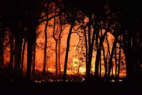 2019년 9월에 시작돼 2020년 2월에야 진화된 호주산불은 10억 마리 이상의 야생동물을 죽였다. by Deep Rajwar  출처: https://www.pexels.com/ko-kr/photo/4621457/