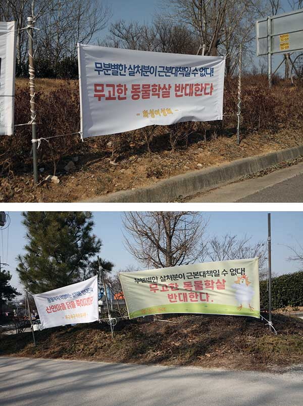 마을 어귀에 게시된 살처분 반대 플래카드들. by 박종무
