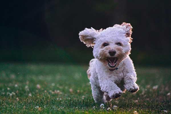 내가 가장 행복했던 순간이 언제였는지 떠올려보라. '행복이란 무엇인가?'에 대한 답이 그 안에 숨어있을지 모른다. by Joe Caione  출처:https://unsplash.com/photos/qO-PIF84Vxg