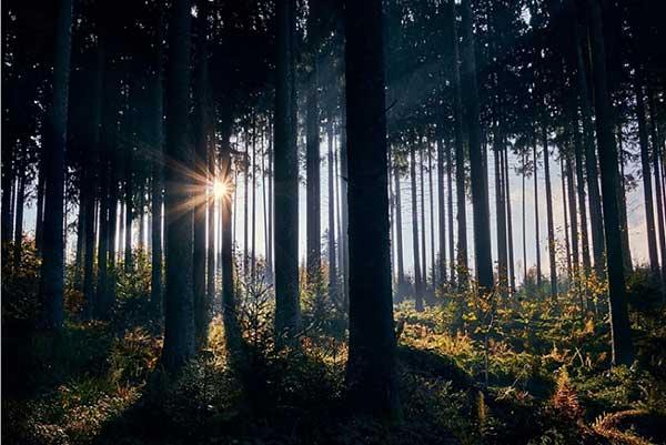 기후위기는 '생물다양성'의 붕괴로 이어진다. 숲 속에는 탄소를 흡수하는 기능적 목재만 살아가는 곳이 아니다. by felix_w 출처 : https://pixabay.com/images/id-3799243/