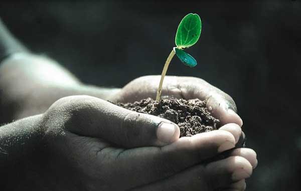 무소유, 공용, 공활의 원리는 기후위기 시대에 더욱 빛날 것이다. by Pexels 출처: https://pixabay.com/photos/hands-macro-plant-soil-grow-life-1838658/