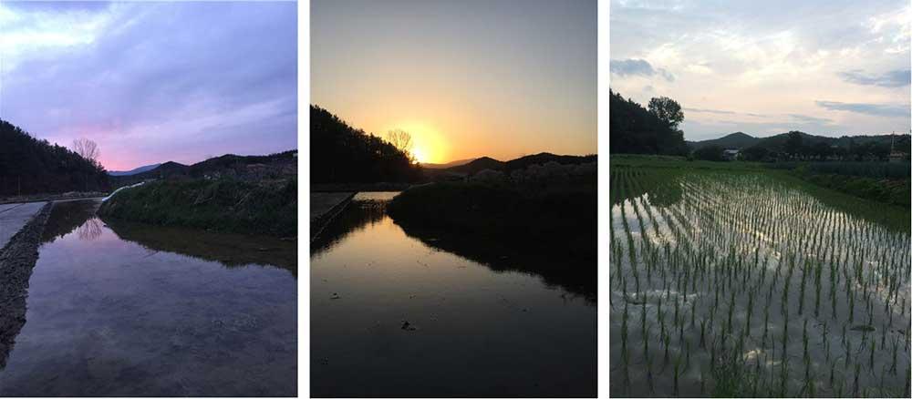 같은 자리에서 찍었지만 매번 다른 사진들. (좌) 2021. 3. 24. (중) 2021. 3. 30. (우) 2021. 6. 18