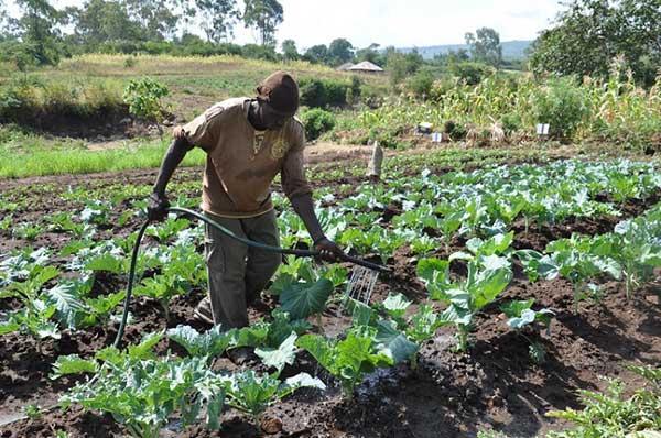 관료주의 시대, 대공장 시대의 인간과 전혀 다른 주체성을 가진 소농은 기후위기 시대에 새롭게 평가받게 될 것이다.  by V. Atakos 출처 : https://www.flickr.com/photos/cgiarclimate/9253204963/