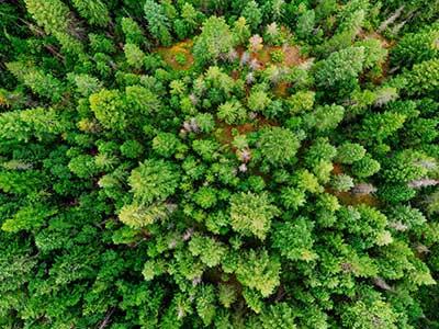 탈성장처럼 단순하게 규정하기 어렵고 더욱이 한창 진행 중인 이론과 운동이라면 이렇게 나무보다는 더 큰 모임인 작은 숲들을 봄으로써 전체 숲을 조망하고 그 숲이 어떻게 발전할 것인지를 파악하는 게 더 적절할 수 있다. by Akil Mazumder 출처 : https://www.pexels.com/ko-kr/photo/1072824/