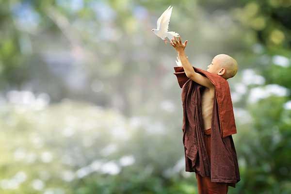불교는 인간 중심의 분별적 사고와 성장주의적 사고를 치유하기 위해 모든 생명의 상호연결성을 강조한다. by truthseeker08, 출처 : https://pixabay.com/photos/buddhist-monk-novice-buddhism-bird-5843719/