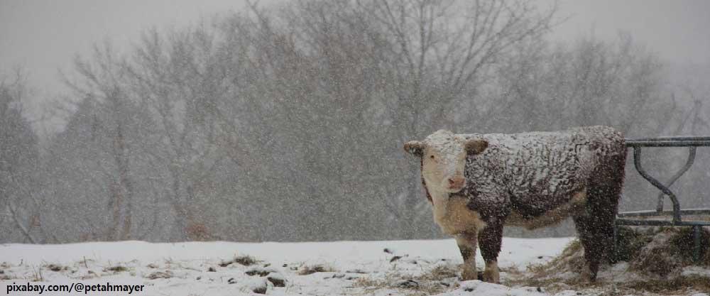 기후위기의 시대, 동물들은 어떻게 될까?
